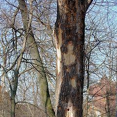 "photo ""Trees get sick too"""