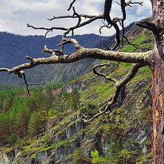 """фото """"Алтайские мотивы. Дерево"""""""