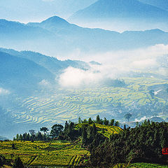 "photo ""Mountain vapor and grove upon grove of green trees"""