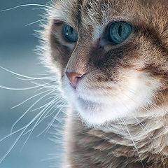 "photo ""My cat"""