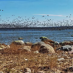 "photo ""Goose Paradise. Tools Bay"""