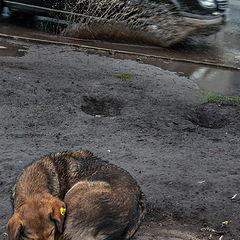 """фото """"Жизнь собачья... (2)"""""""