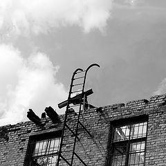 "фото ""Лестница в небо. После Зеппелин."""