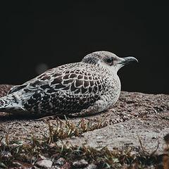 """фото """"lonely bird"""""""