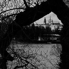 """photo """"Пражский Град и дерево"""""""