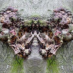 """photo """"demon-tree"""""""