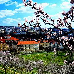 """photo """"Весна в Праге"""""""