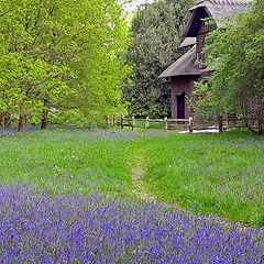 "photo ""Bluebells in Spring"""