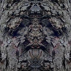 """photo """"the baffled tree"""""""