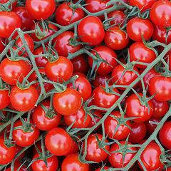 """фото """"Tomato"""""""