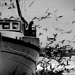 "photo ""boat and seagulls"""