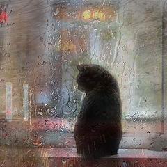 """фото """"Дождливое лето..."""""""