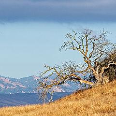 """фото """"Вид на горы."""""""