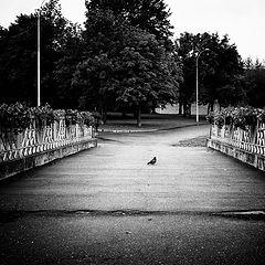 """фото """"Одинокий..."""""""
