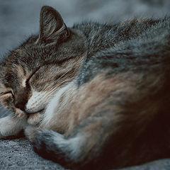 "photo ""sleeping cat"""