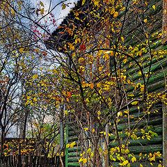 "фото ""Осень в старом дворе"""