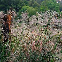 """фото """"Трава по пояс..."""""""