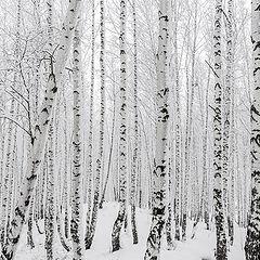 """фото """"Лес после снегопада"""""""