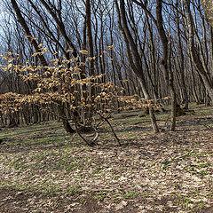 """фото """"Весна пришла, а осень в памяти осталась..."""""""