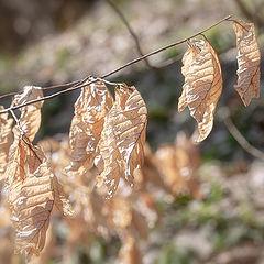 """фото """"Весна пришла, а осень в памяти осталась…"""""""