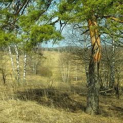 """фото """"апрельский полдень"""""""