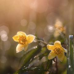 """фото """"Солнечная весна"""""""