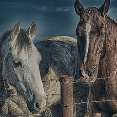 """photo """"The first two horses ..."""""""