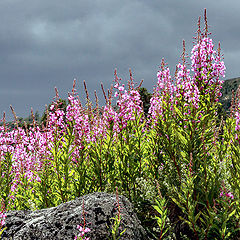 "фото ""Flowering time"""