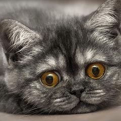 """фото """"Ещё раз про котика"""""""