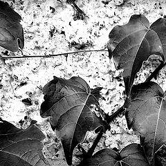 "photo ""leaves"""