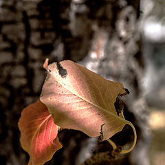 """photo """"Autumn color ..."""""""