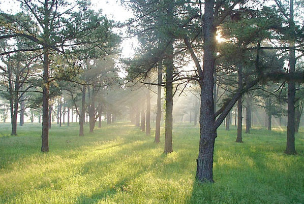 "photo ""Morning Mist"" tags: landscape, nature, forest"