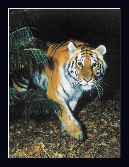 """фото """"Ночной охотник"""" метки: природа, дикие животные"""