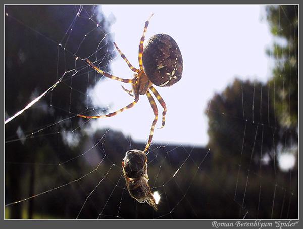 ловит ли паук тараканов