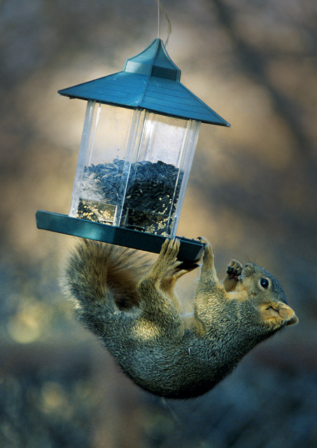 "photo ""Strange Bird At The Feeder"" tags: nature, humor, wild animals"