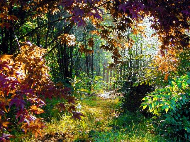 "photo ""Secret Garden"" tags: landscape, forest"