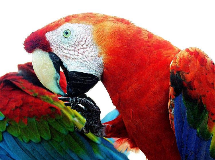 """фото """"Wings In Technicolor"""" метки: путешествия, природа,"""