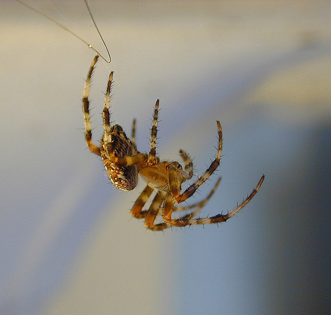 "photo ""Spider 2"" tags: macro and close-up, nature, insect"