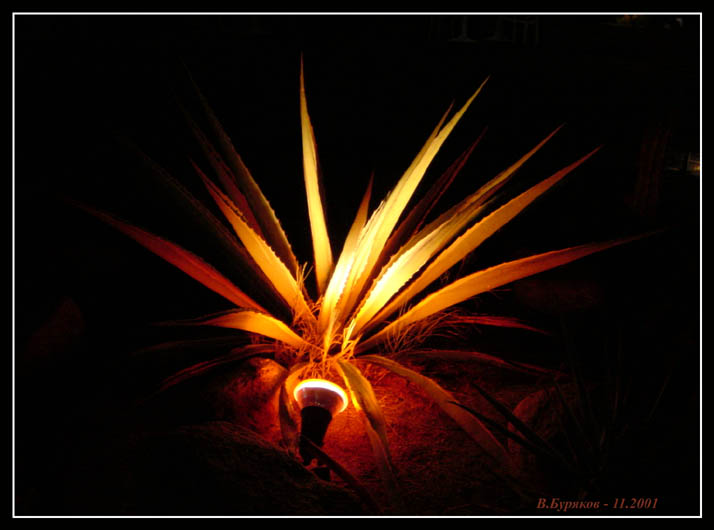 """photo """"Fire in night"""" tags: travel, nature, Africa, flowers"""