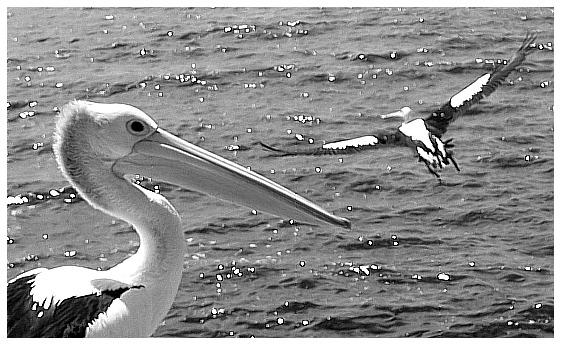 """фото """"Watching birds"""" метки: природа, путешествия, Австралия, дикие животные"""