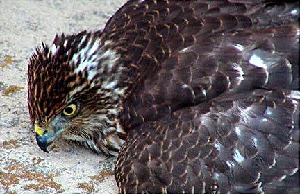 "photo ""Image #2...A Xmas Story"" tags: nature, wild animals"
