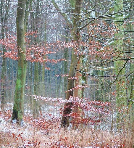 """фото """"Come Winter"""" метки: природа,"""