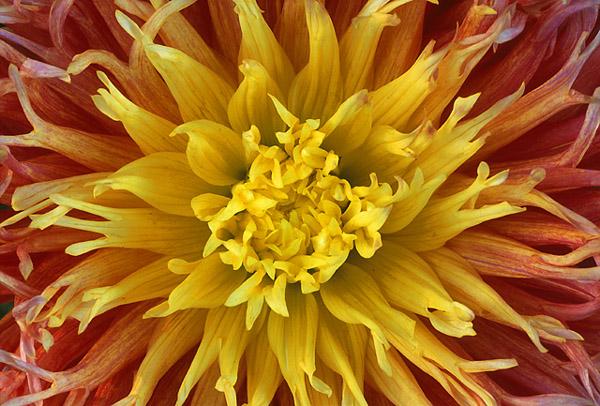 "фото ""The New Year Promise"" метки: макро и крупный план, природа, цветы"