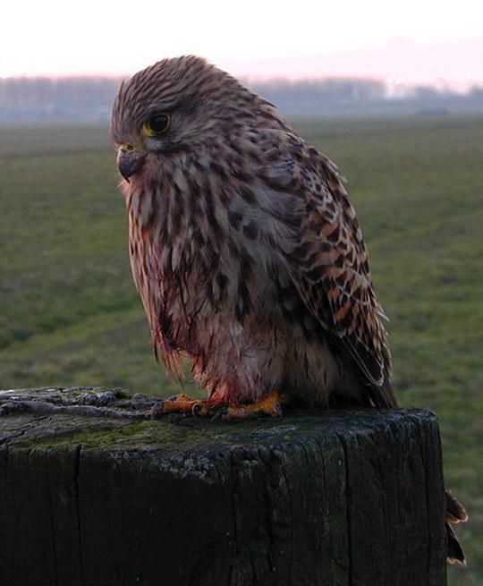"""фото """"Owl 2"""" метки: макро и крупный план, природа,"""