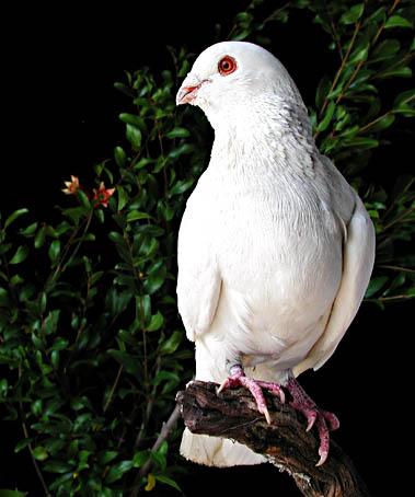 """photo """"Peace.....!"""" tags: nature, pets/farm animals"""