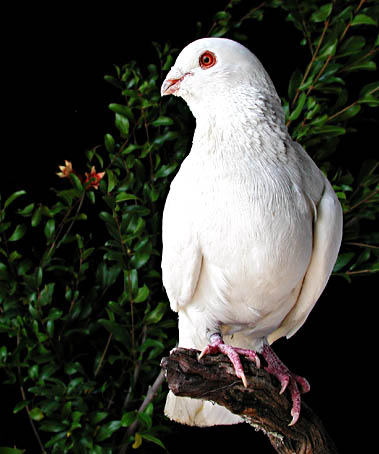"фото ""Peace.....!"" метки: природа, домашние животные"
