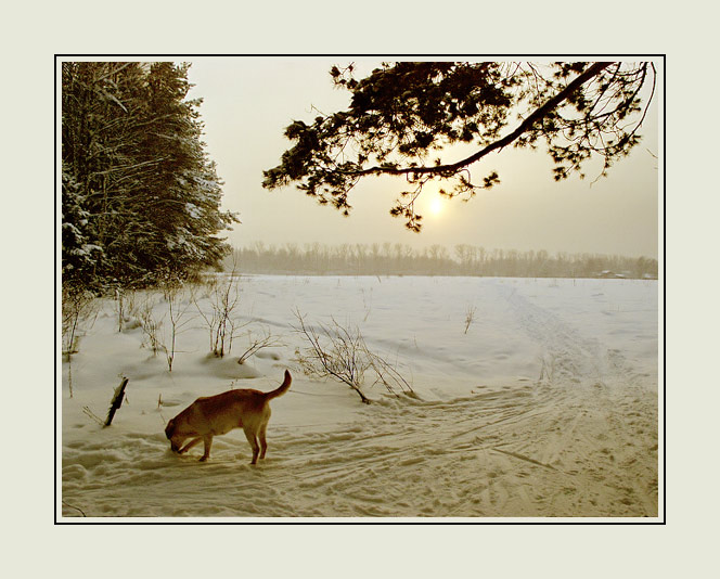 "photo ""Happy New Year!"" tags: landscape, nature, forest, pets/farm animals"
