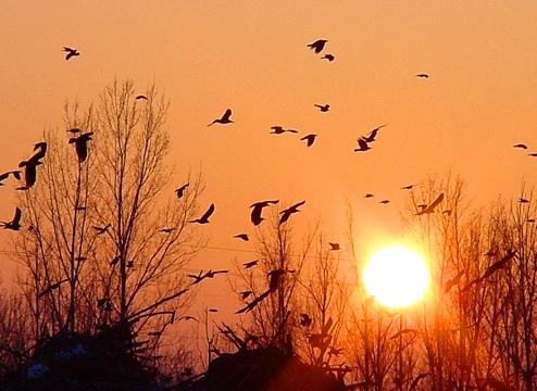 "photo ""GOOD BYE 2001!"" tags: landscape, sunset"