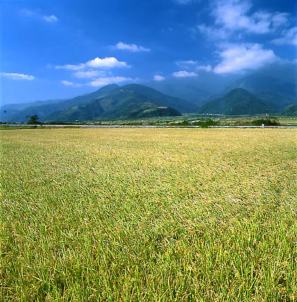 "photo ""Great rice field"" tags: landscape,"