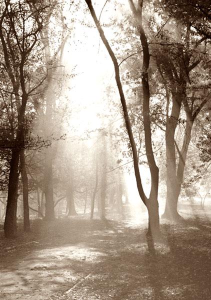 "photo ""Untitled photo"" tags: landscape, misc., autumn"